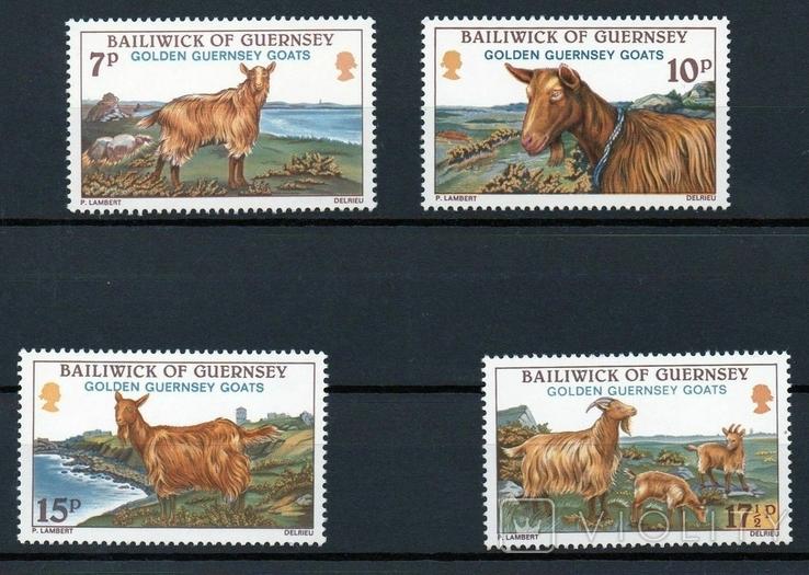 Гернси 1980 козы, овцы