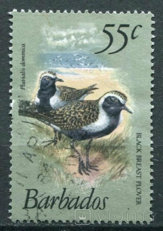 1981 Великобритания Колонии Барбадос Птицы 55с, фото №2