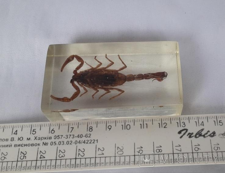 Скорпион в оргстекле, фото №7