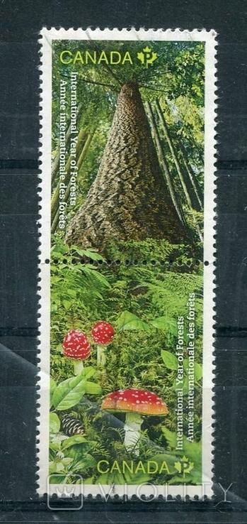 Марка гашеная Канада деревья лес природа