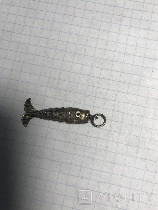 Рыбка, фото №4