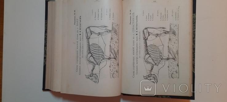 Александрова-Игнатьева.Основы кулинарного искусства 1902г, фото №7