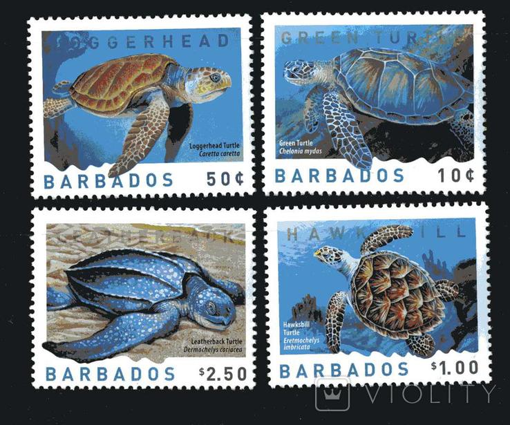 Барбадос 2007 - Фауна.Черепахи.