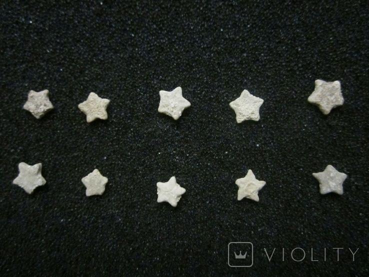 Звёздочки (разновидность морской лилии) 10шт. №9, фото №3