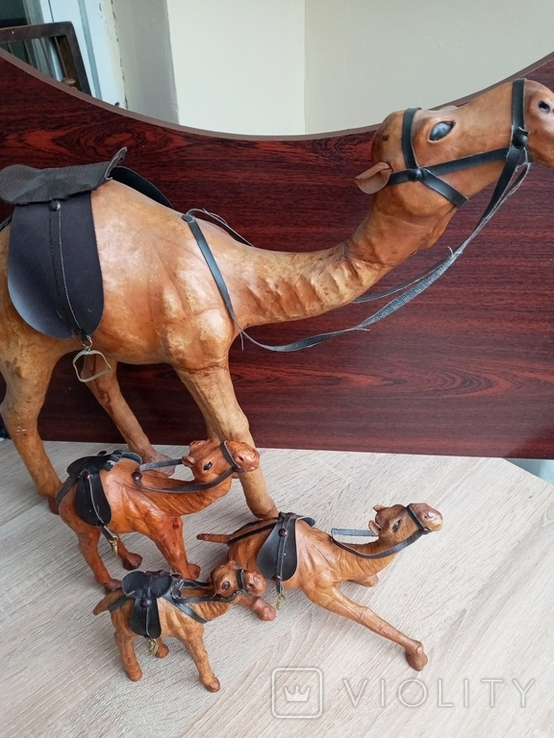 Верблюд, фото №7