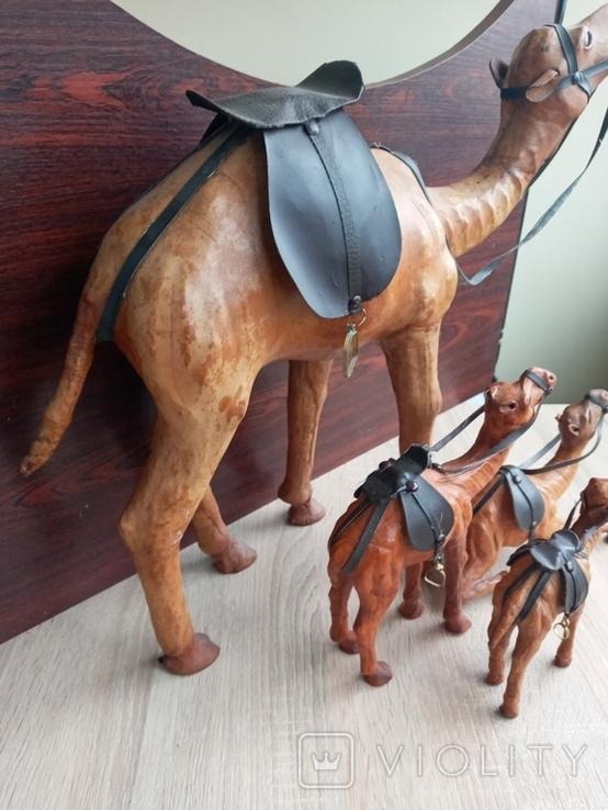 Верблюд, фото №11