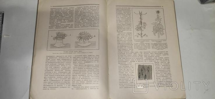 Знание для всех. 1914 год. Жизнь и смерть, фото №6