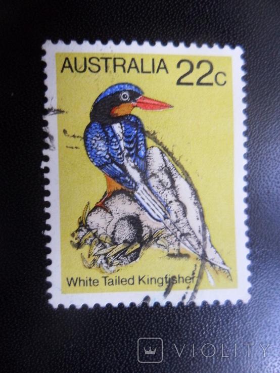 Фауна. Австралия. Птица. гаш
