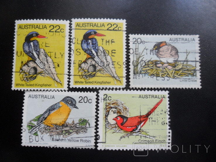 Фауна. Австралия. Птицы. гаш