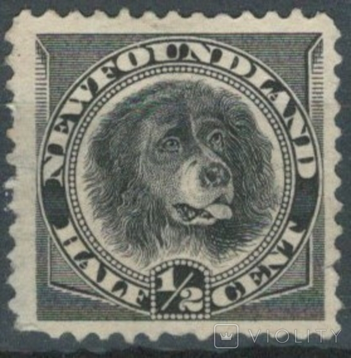 Бе03 Британские колонии. Ньюфаундленд 1894 №41 (*) (12 евро)