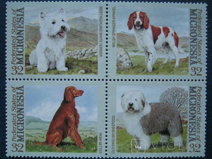 фауна собаки микронезия на