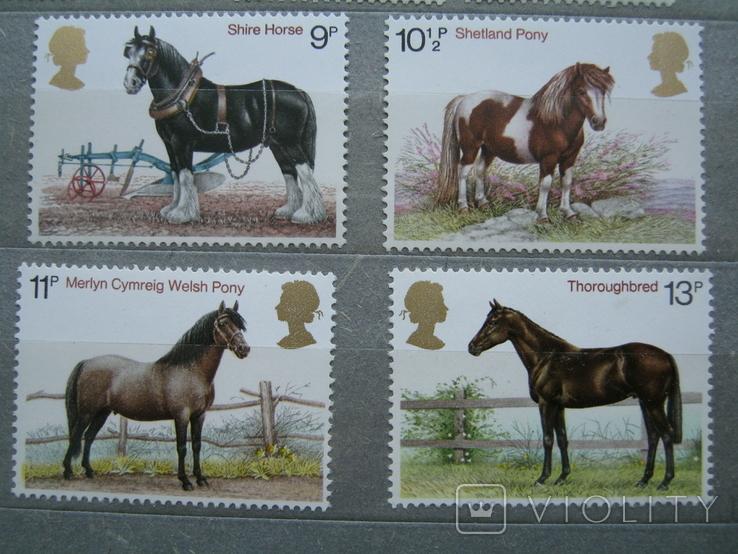 Фауна лошади великобритания на