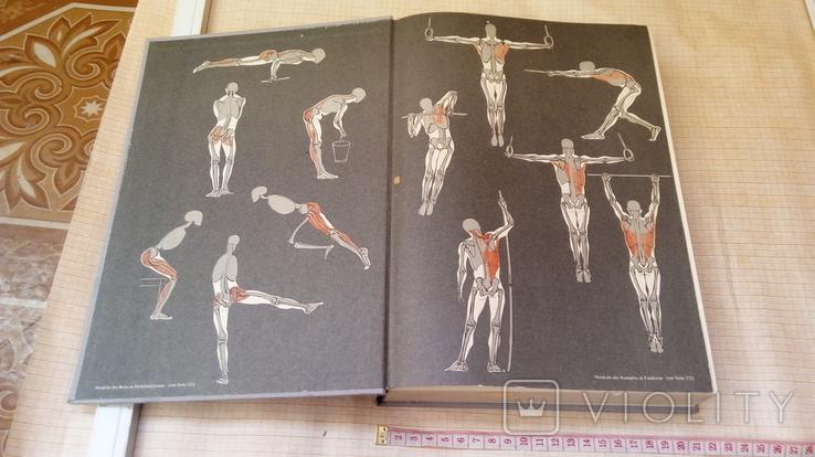 Анатомия тела, фото №3