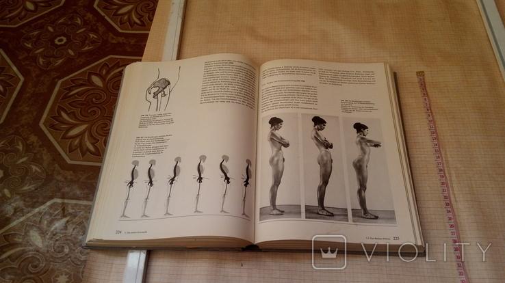Анатомия тела, фото №12