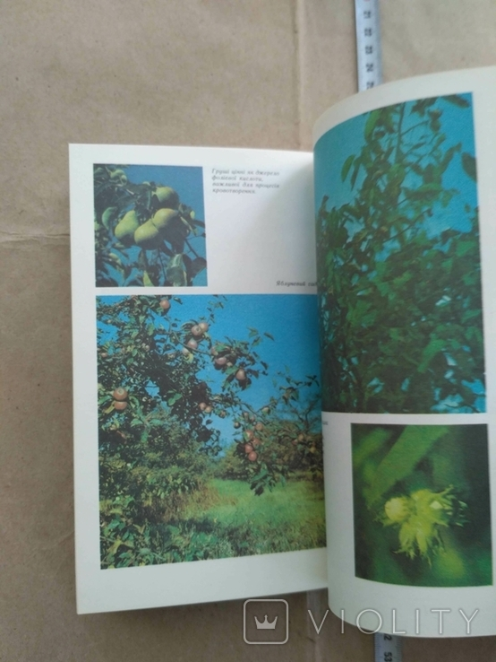 Овочі і фрукти в нашому харчуванні 1988р, фото №7