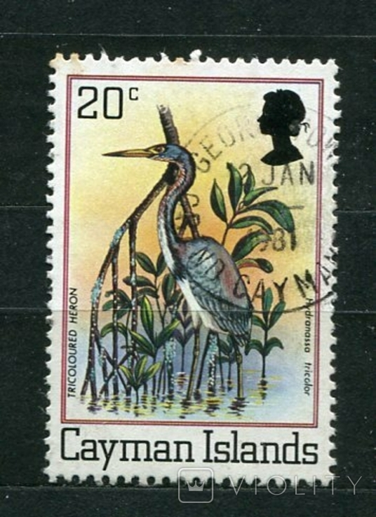 Британские колонии, Каймановы о-ва, птица. 1980 г., фото №2