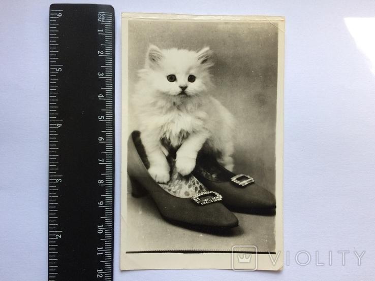 Котёнок в туфельке, фото №2