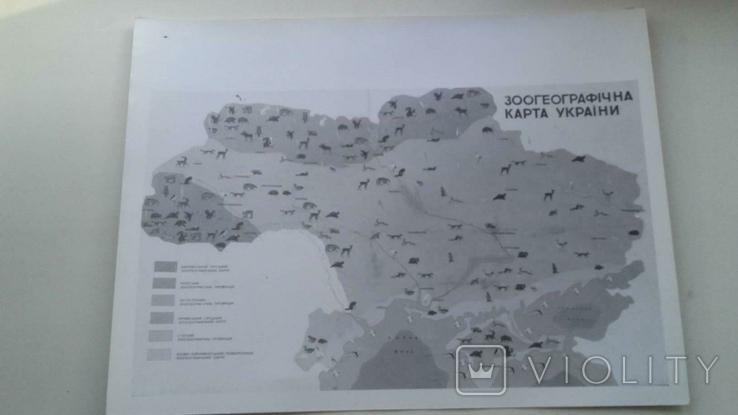 Зоогеографическая карта Украины фотокопия большой формат, фото №2