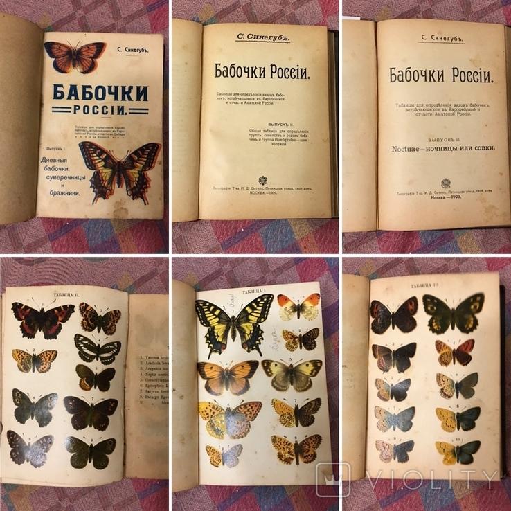 Бабочки Определение видов - 1908г Три выпуска С цветными таблицами