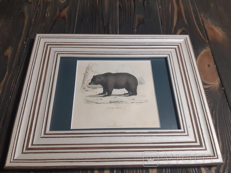 1840 Гравюра медведя