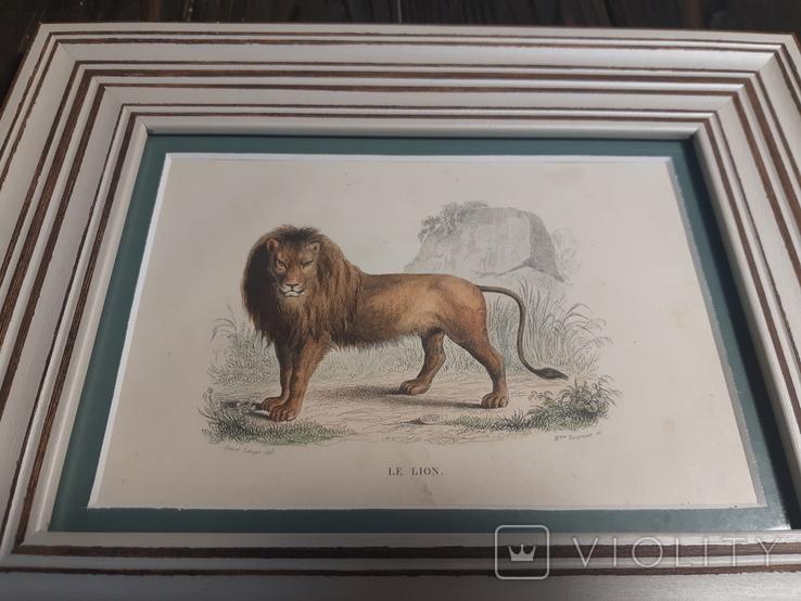 1840 Гравюра льва