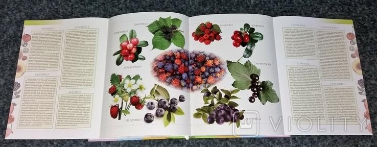 Четыре сезона. Кулинария круглый год. Фрукты и ягоды. 2013 г., фото №6