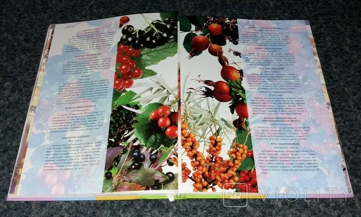 Четыре сезона. Кулинария круглый год. Фрукты и ягоды. 2013 г., фото №7