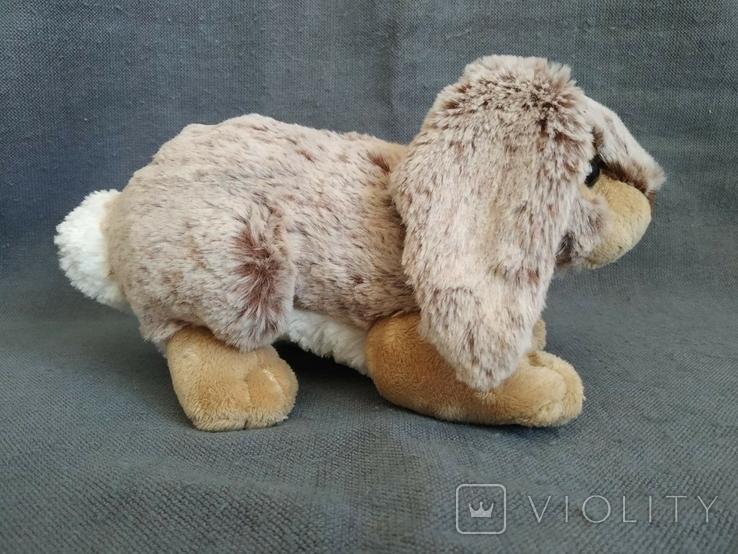 Кролик Индонезия, фото №3