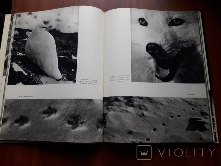 Природа Арктики. В.Пухальский Изд-во Варшава, фото №6
