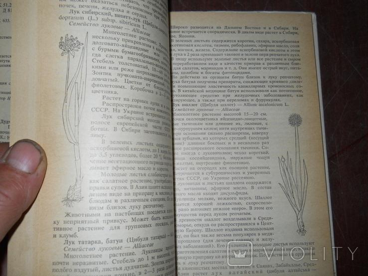Пряно-араматические и пряно-вкусовые растения, фото №5