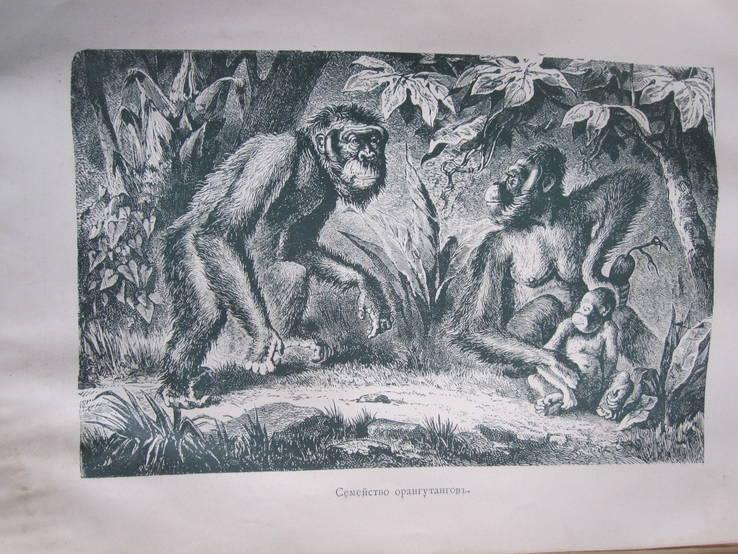 Эволюция мира ( том 3 ), фото №7
