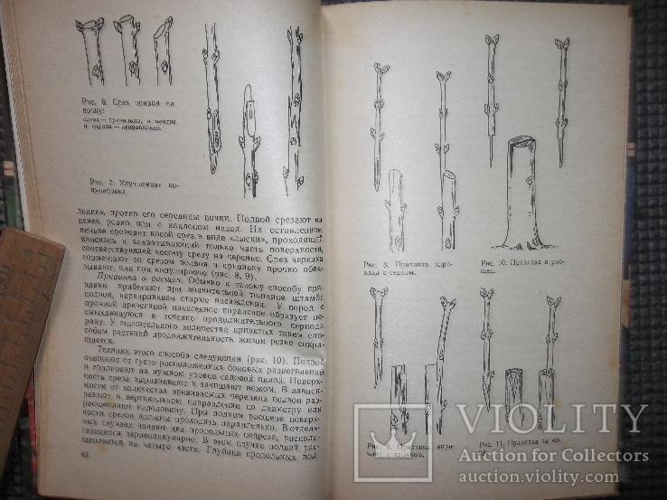 Книга цветовода.1983 год., фото №5