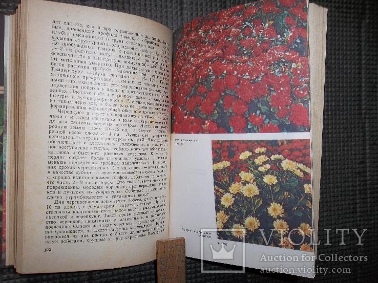Книга цветовода.1983 год., фото №6