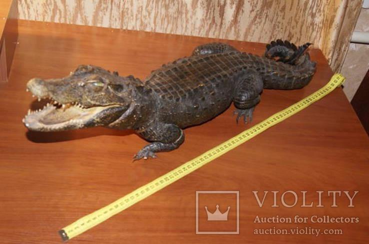 Чучело крокодильчика