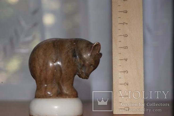 Мраморный медведь, фото №2