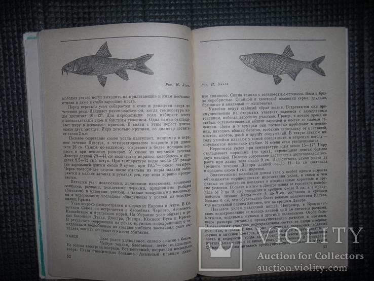 Любительское рыболовство.1977 год., фото №6
