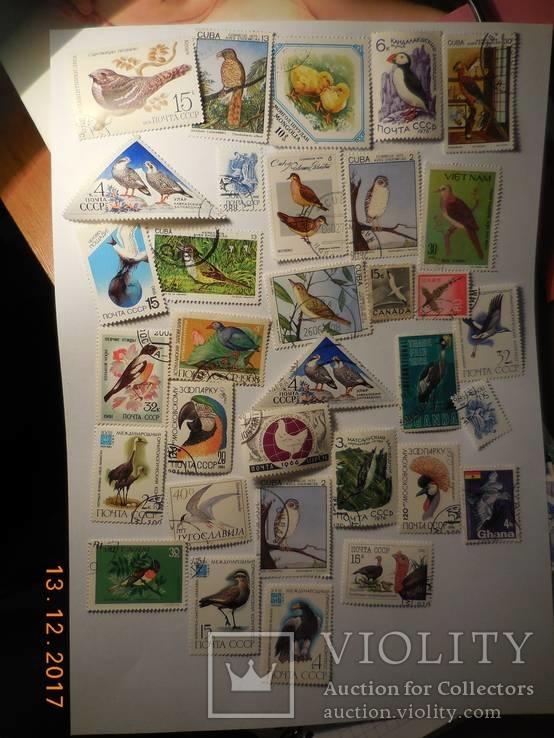 Флора и фауна 302 штуки + 42 разных