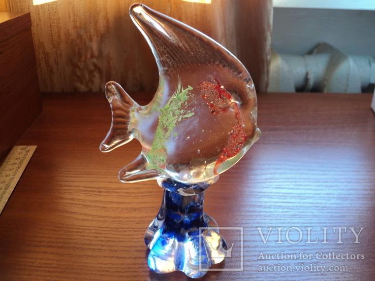 Тропическая рыбка, фото №5