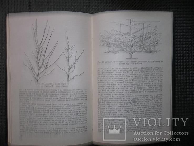 Справочник по садоводству.1983 год., фото №7
