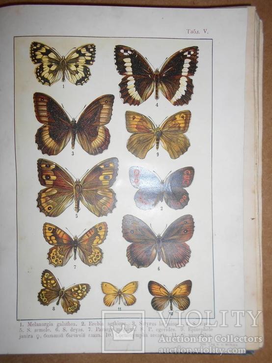 1912 Бабочки Европы с цветными иллюстрациями