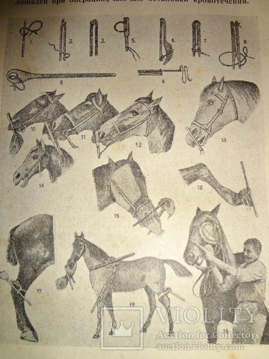 1929 Лечебник Скотоводство
