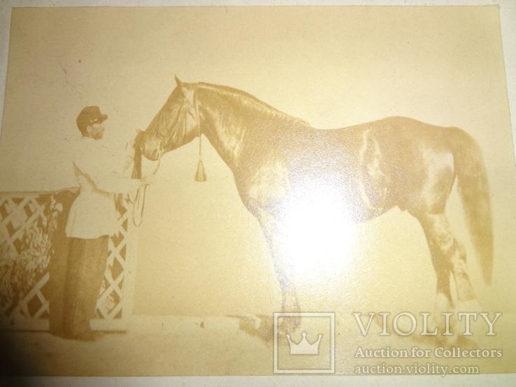 1867 Коннозаводство Коневодство с настоящей фотографией лошади