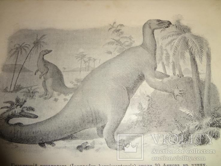 1905 География животных с множеством иллюстраций