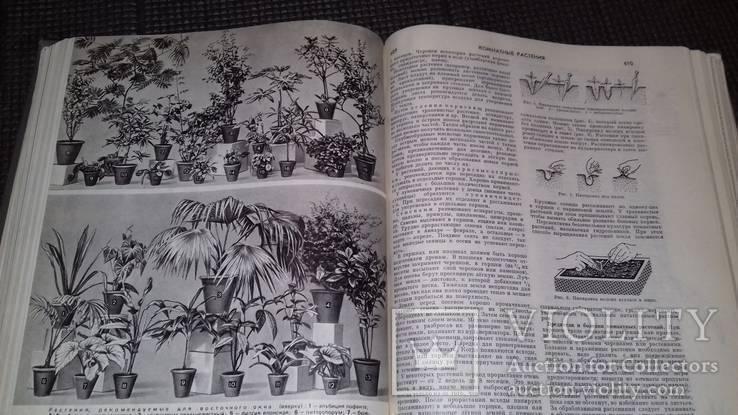 Краткая энциклопедия домашнего хозяйства 1979г., фото №11