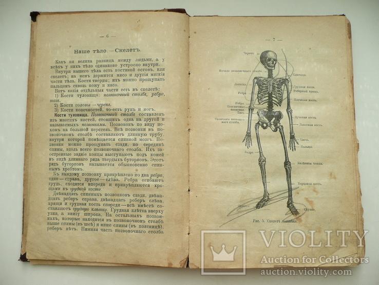 Книга Божий Мир в Беседах и картинках 1907г., фото №9