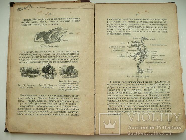 Книга Божий Мир в Беседах и картинках 1907г., фото №11