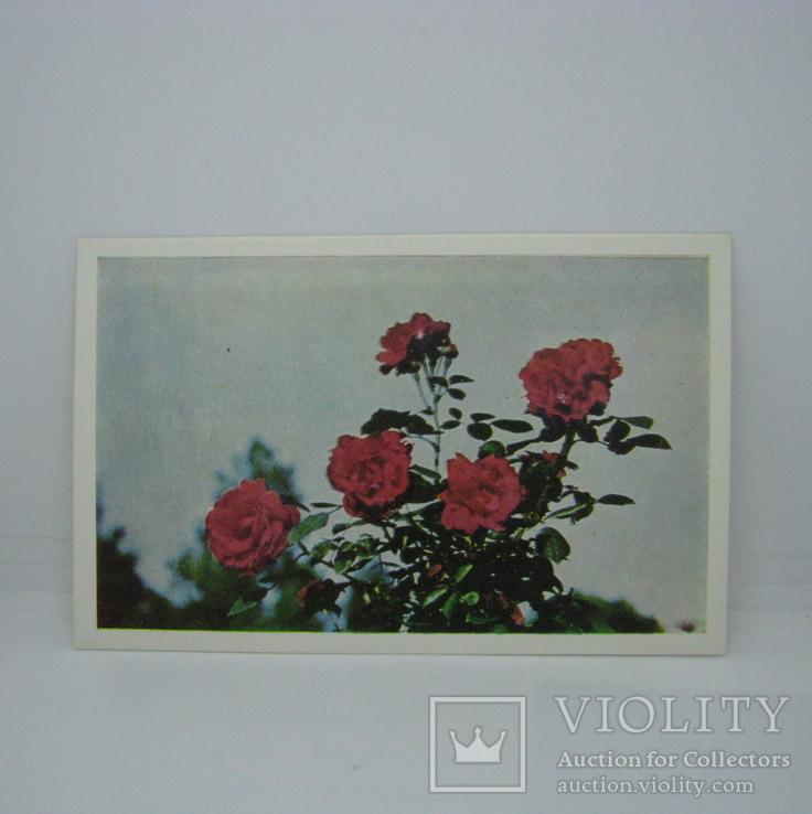 Сделать, открытка болгарские розы