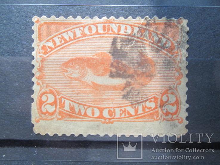 Ньюфаундленд 1887 фауна гаш