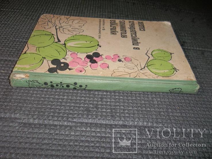 Культура ягодников в приусадебных садах.1966 год., фото №3