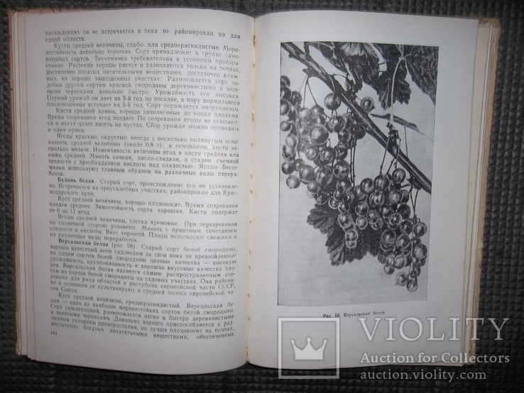 Культура ягодников в приусадебных садах.1966 год., фото №9